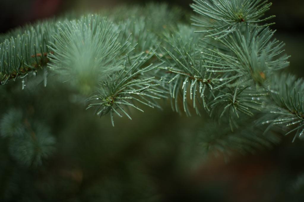 ChristmasTree14-6